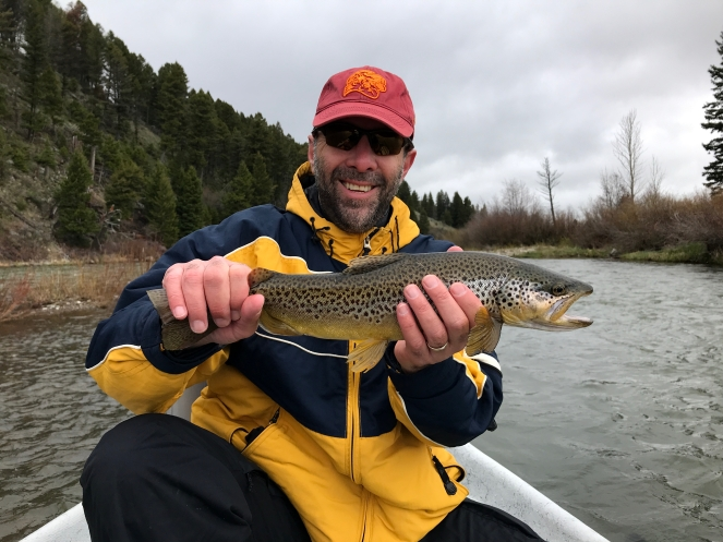 Upper Madison River brown trout caught on a stonefly nymph during a guided fly fishing trip near Ennis, Montana.